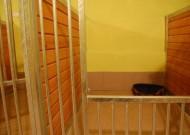 - pokój 1 - zdjęcie 950