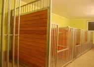 - pokój 1 - zdjęcie 949